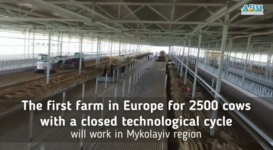 The first farm in Europe for 2500 cows with a closed technological cycle will work in Mykolayiv region