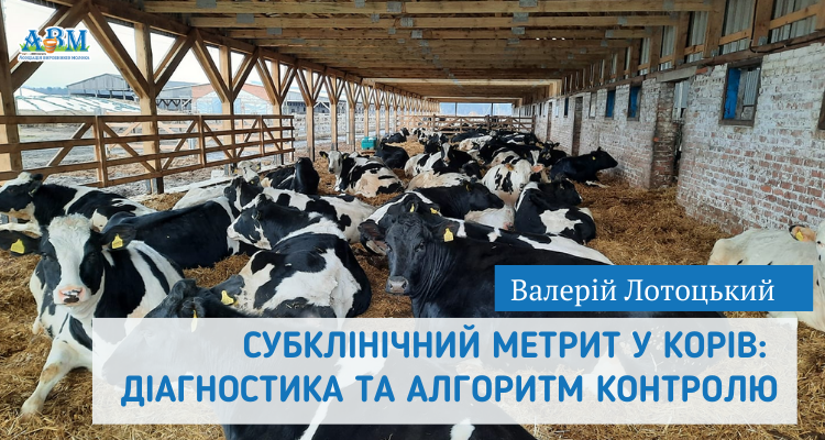 Субклінічний метрит у корів: діагностика та алгоритм контролю. Валерій Лотоцький