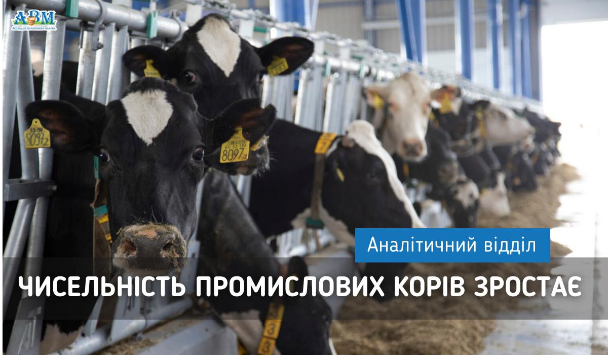 Чисельність промислових корів зростає